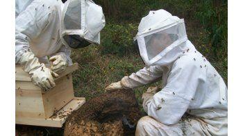 mas de 40 apicultores potencian la actividad en comodoro rivadavia