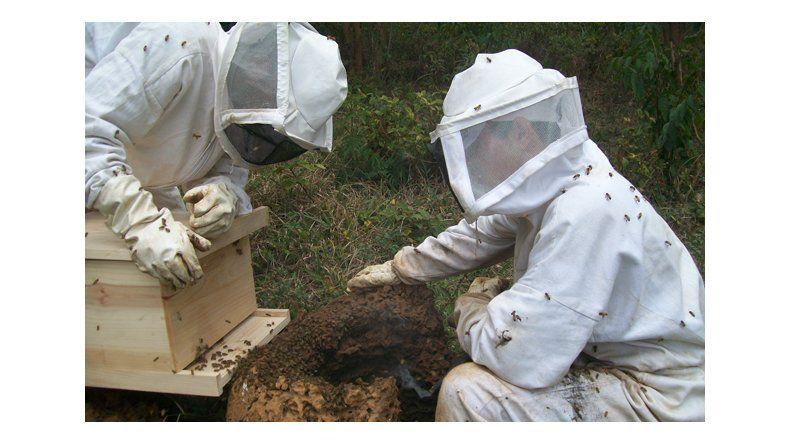 Más de 40 apicultores potencian la actividad en Comodoro Rivadavia