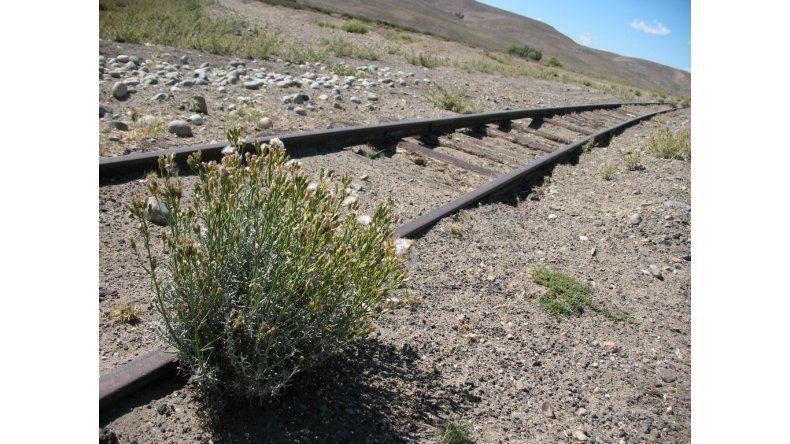 Reactivan un ramal ferroviario