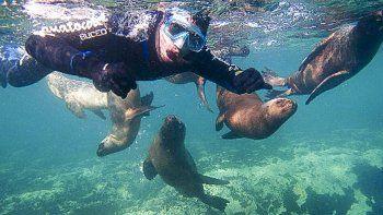 La fauna marina provincial ha sido objeto de invasivas intervenciones en los últimos años, como muestra la imagen captada en Puerto Madryn.