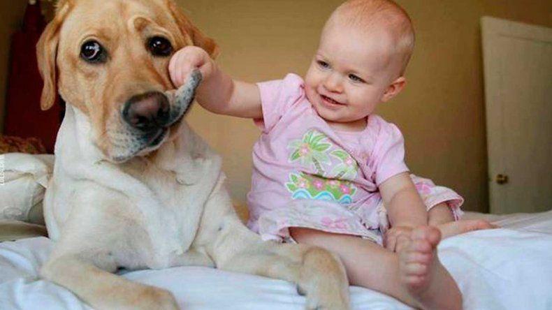 Afirman que vivir con perros en la infancia reduce el riesgo de sufrir asma