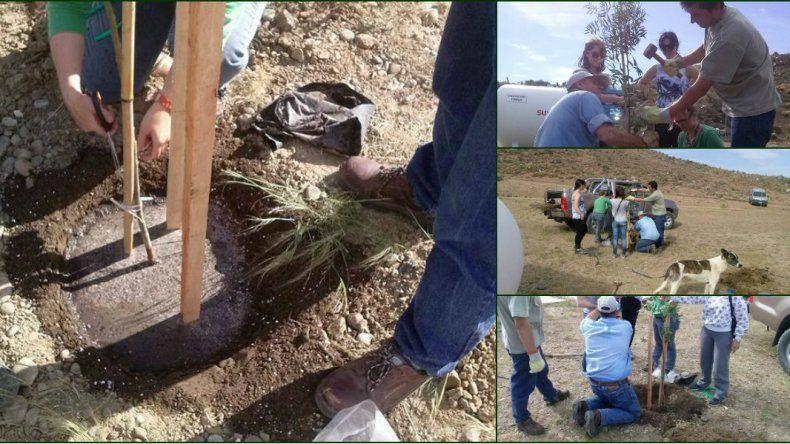 Se plantaron 26 árboles en el dispensario canino municipal