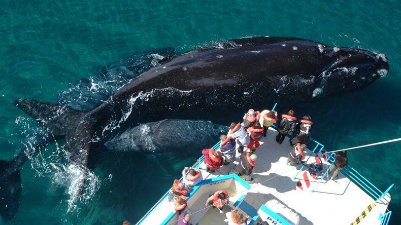 Puerto Madryn es usualmente visitada durante la temporada de avistaje de ballenas