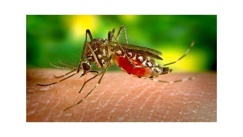Declararon la emergencia sanitaria global por el zika