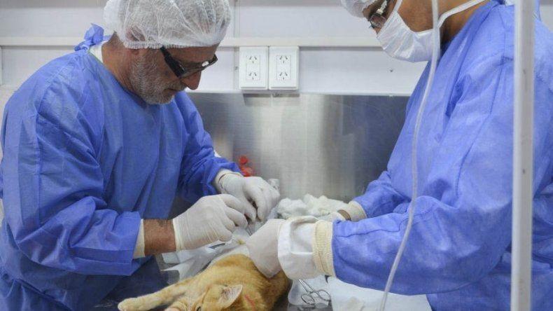 Con dos tráilers distribuidos en zona norte y sur se realizaron más de 5.000 esterilizaciones de mascotas en Comodoro Rivadavia.