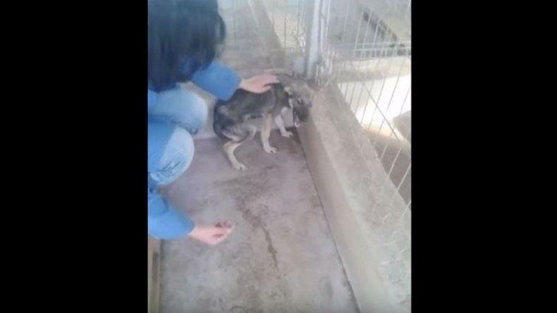 Una perra fue tan maltratada que llora cuando le hacen caricias