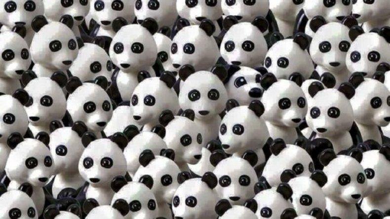Encontrá al perro entre los pandas