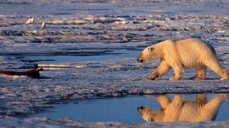 El derretimiento del Artico es una de las consecuencias del fenómeno climático.