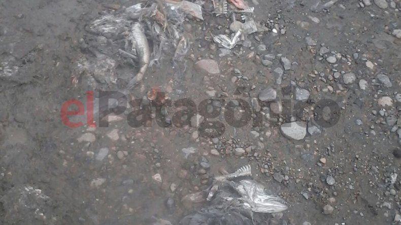 Desechos de pescado en las veredas del Stella Maris