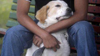 Buscan organizar la legislación sobre la tenencia de mascotas