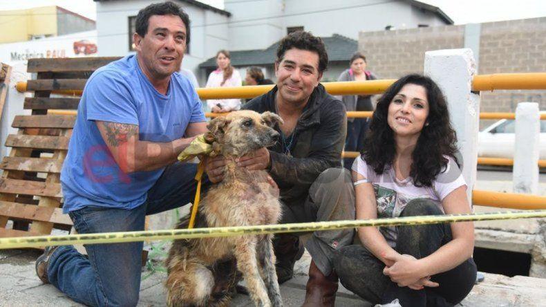Se perdió Canaleta, la perra rescatada ayer en el Pueyrredón