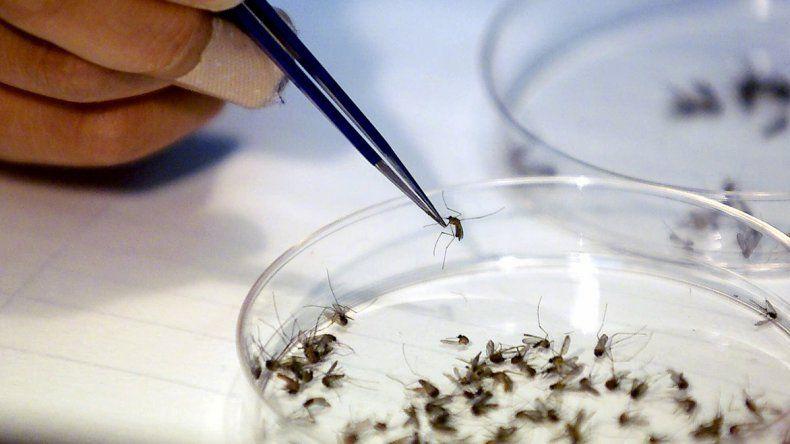 Las provincias más afectadas por el dengue