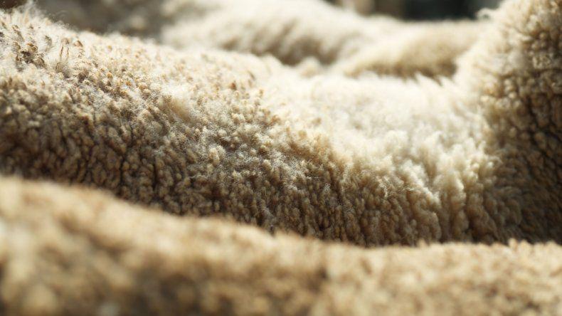 Recuperan ganado robado en el establecimiento rural La Paloma
