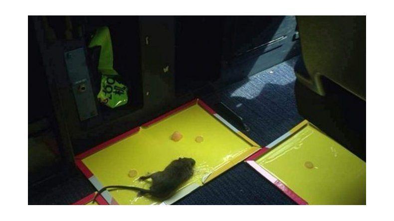 Una rata obligó a un avión a volver al aeropuerto