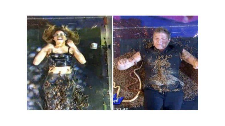 Les tiraron gusanos, arañas y dos mil cucarachas