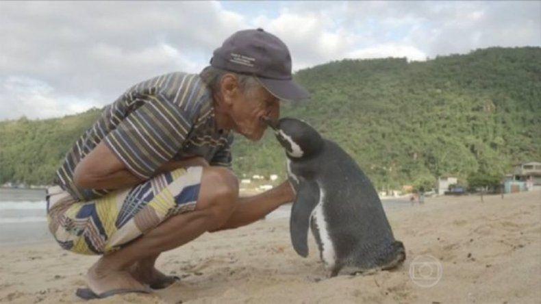 Un pingüino nadó 8.000 km para encontrarse con el hombre que lo salvó