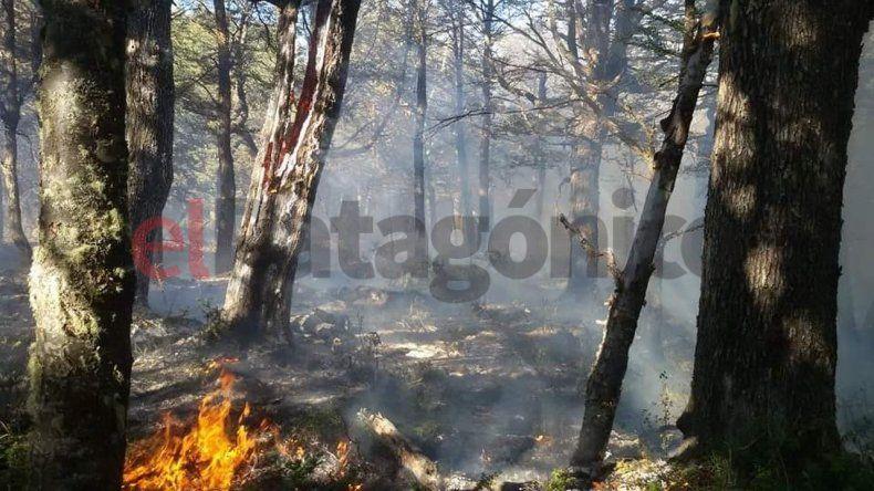 Nos quemaron todo el bosque, lamentó el dueño de un complejo