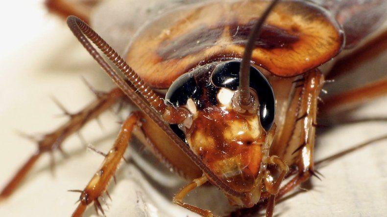 Impresionante invasión de cucarachas en pleno centro neuquino