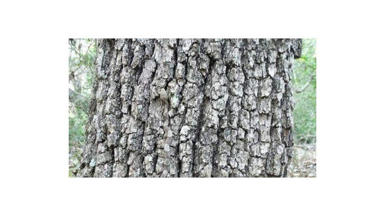 ¿Podés encontrar al animal escondido en este árbol?