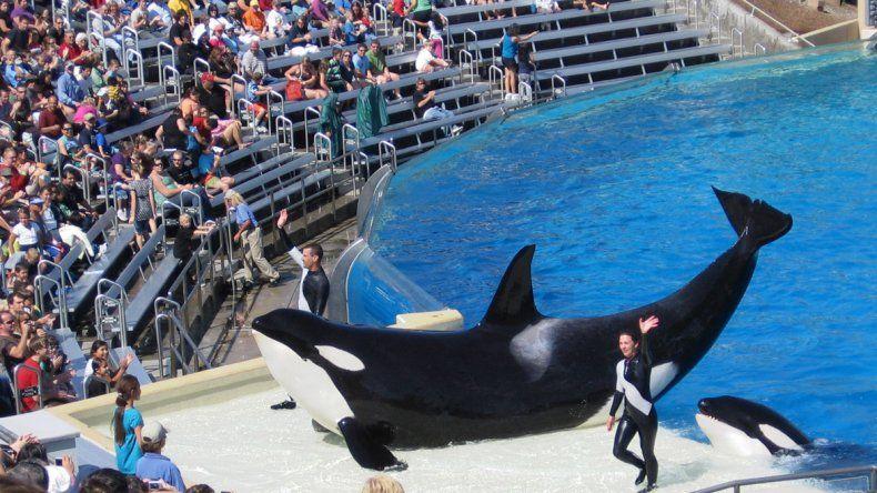 SeaWorld anunció no hará más espectáculos con orcas