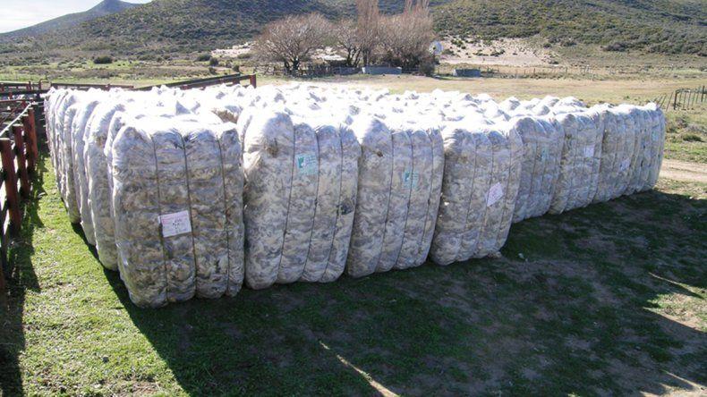 Productores ovinos beneficiados por la política económica del Gobierno nacional.