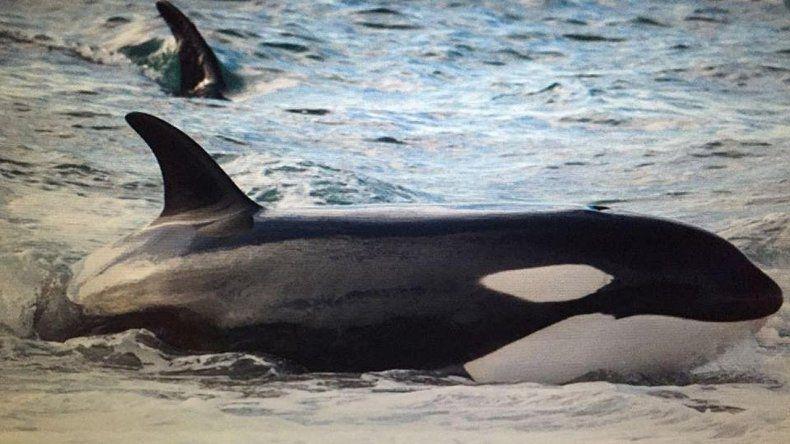 Juan Copello/ Punta Norte Orca Research