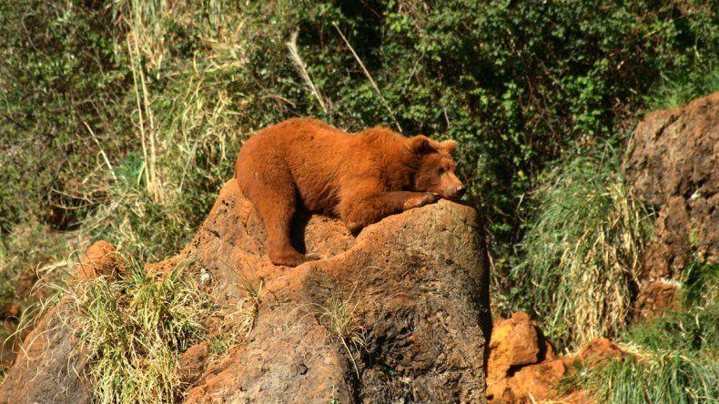 Un zoológico muy especial en España