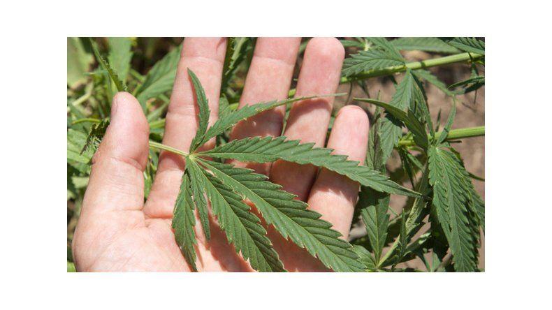 Comodoro se sumó al pedido de la despenalización de uso medicinal del cannabis