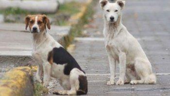 Construirán albergue con castraciones y espacio recreativo para perros callejeros