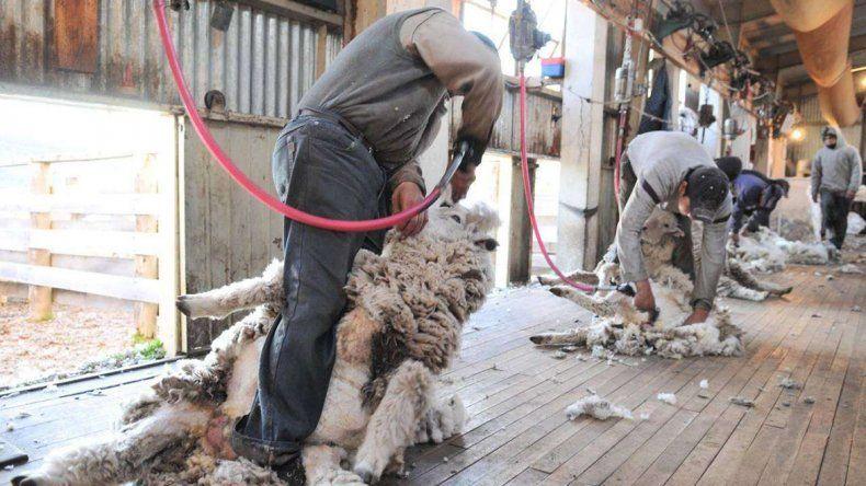 Polémica por la eliminación de las retenciones a las lanas