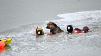 Bomberos salvan a dos perros de morir congelados