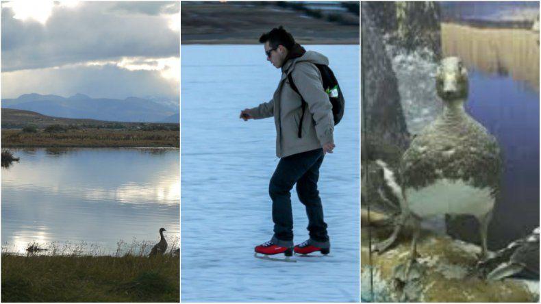 Tres actividades para completar la visita a El Calafate