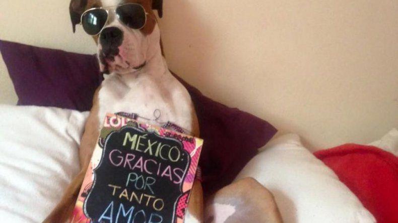 Final feliz para Óscar: el bóxer viajó en avión a México con su familia