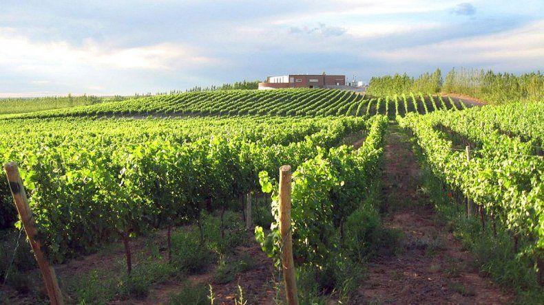 La Ruta del Vino en Neuquén