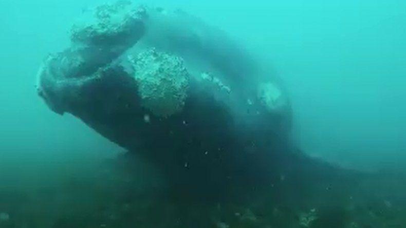 El video de un espectacular encuentro submarino