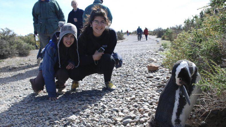 La temporada de pingüinos en Punta Tombo comenzará el viernes 16.