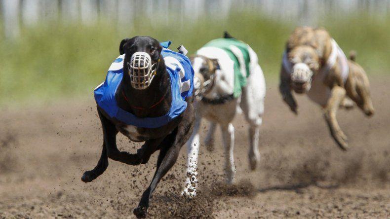 Hoy se aprobaría la ley que prohibe las carreras de galgos
