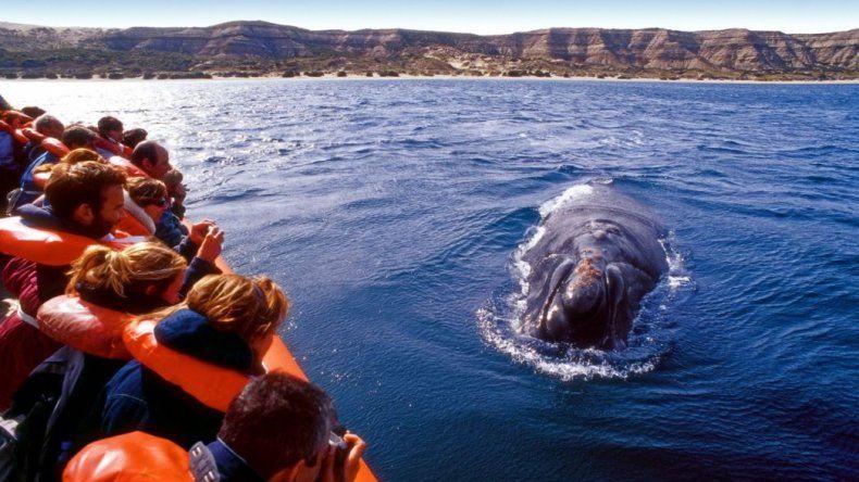 Encuentro emitirá un programa al Monumento Natural Ballena Franca Austral