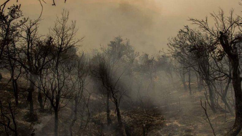 Por año se pierden en Chubut alrededor de 3900 hectáreas de bosque
