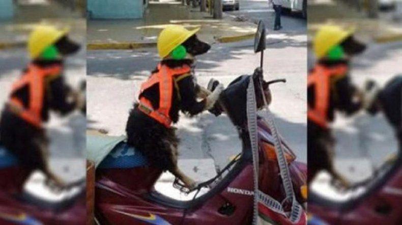 Cachumba, el increíble perro motoquero