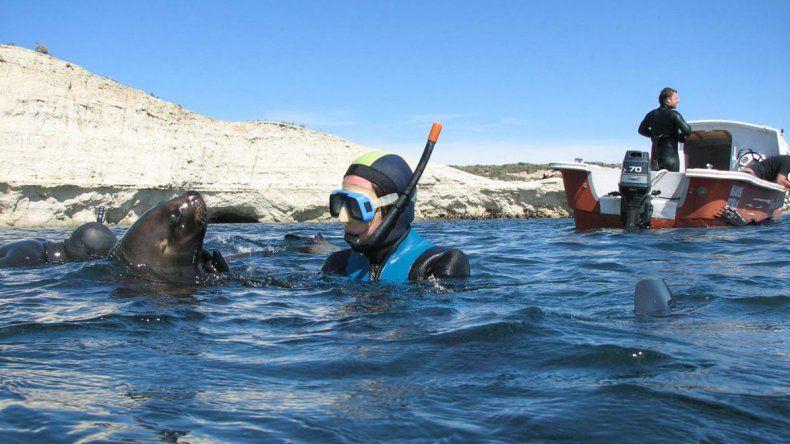 Bucear junto a lobos en Puerto Madryn