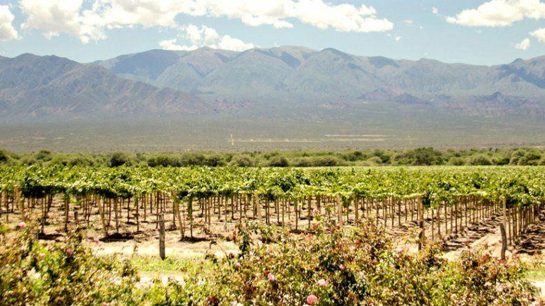 La Ruta del Vino de Altura: producto turístico emblema de los Valles Calchaquíes