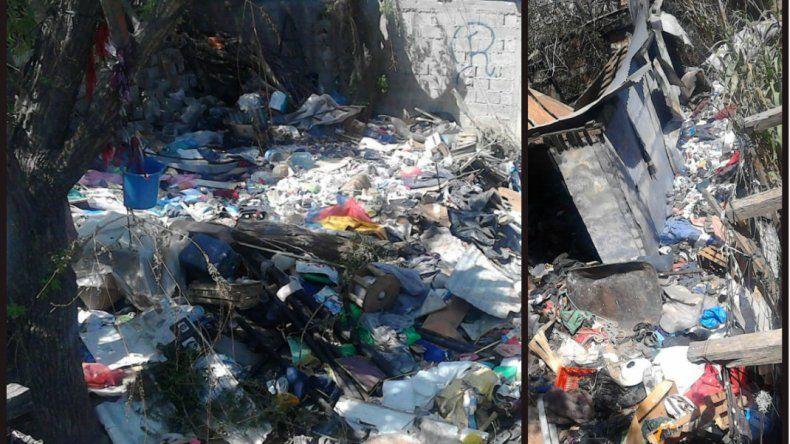 Invadidos por ratas e insectos piden fumigación y limpieza urgente