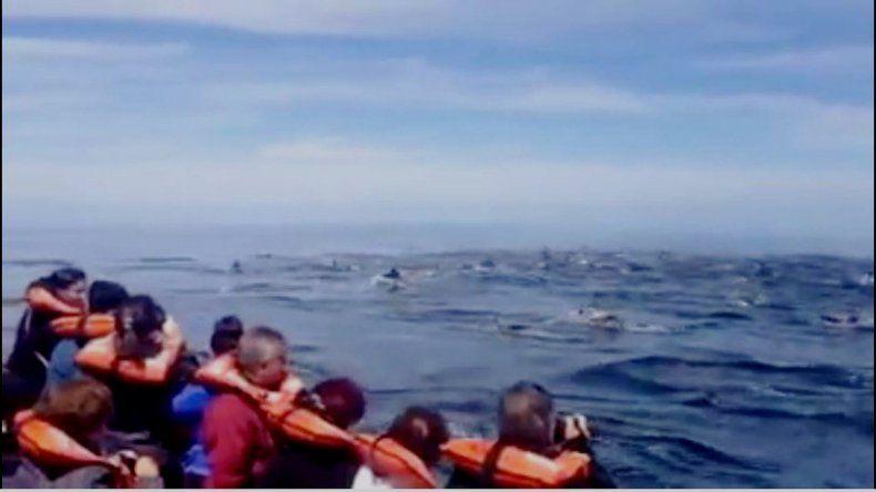 Más de 100 delfines sorprendieron a estos turistas
