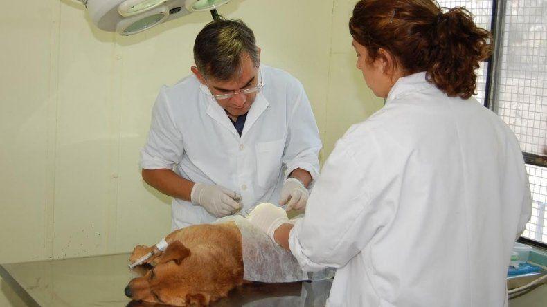 Hoy habrá una nueva jornada de castración canina y felina