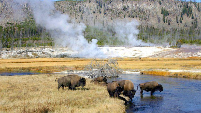 Yellowstone:  espectáculo natural  de géiseres y bisontes