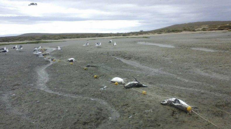 Masacre de Pingüinos en Puerto San Julián