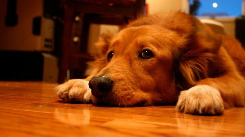 Las Fiestas y la pirotecnia: cómo cuidar a las mascotas