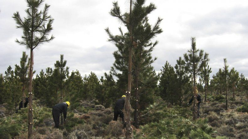 El programa comprende proyectos de plantación.