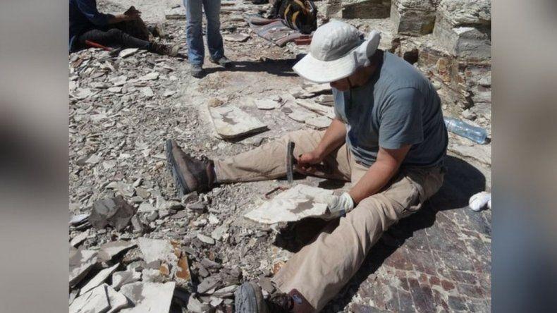 Chubut tiene el fósil más antiguo de la familia del tomate